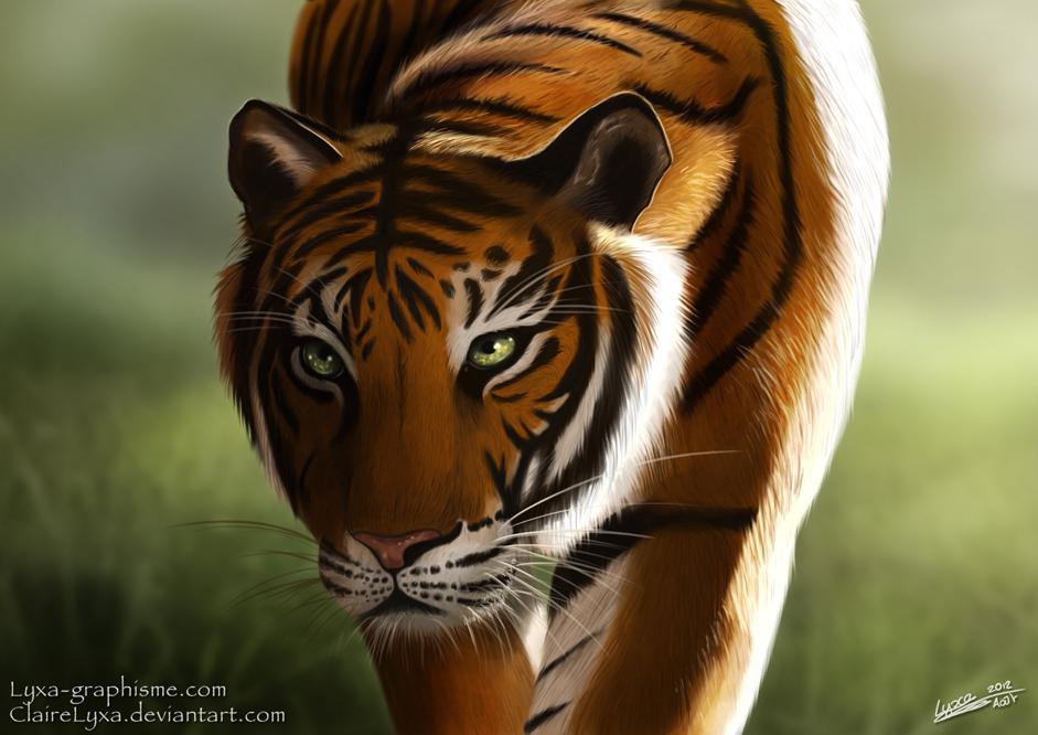 Dessin Portrait D Un Tigre Lyxa Graphisme